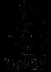 timbo_logo